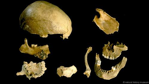 Tổ tiên loài người từng ăn thịt đồng loại