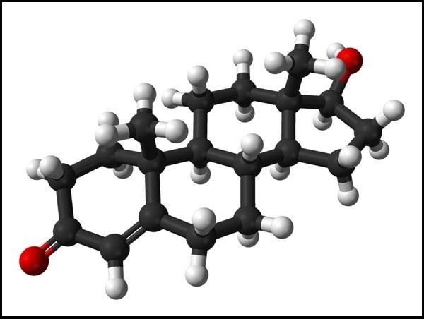 Testosterone định đoạt số phận con người