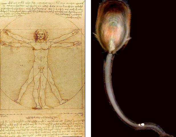Tổ tiên của con người có xúc tu?