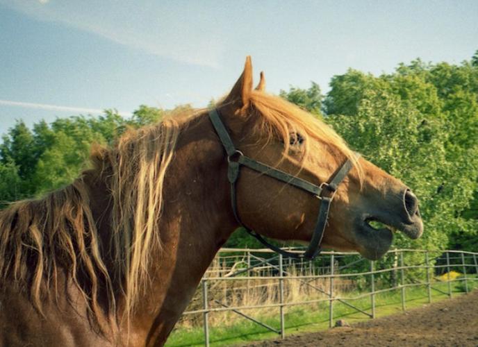 Điểm danh động vật có âm thanh độc nhất vô nhị