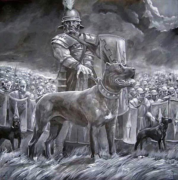 5 đội quân động vật có 1-0-2 trong chiến tranh thời xưa