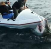 Video: Con cá mập trắng điên cuồng tấn công đoàn làm phim