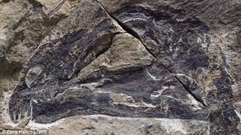 """Hóa thạch """"khủng long dơi"""" xuất hiện tại Trung Quốc"""