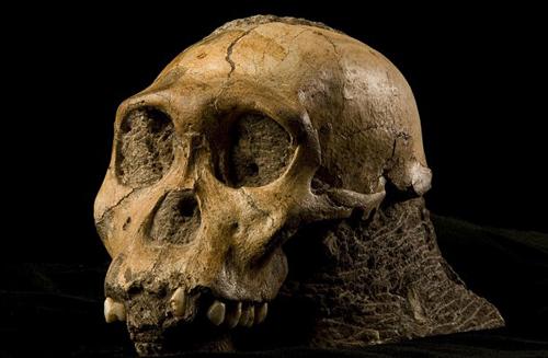 Phát hiện da hóa thạch cổ nhất thế giới ở Nam Phi