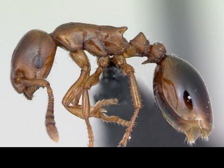 Khám phá những loài kiến lạ trên thế giới