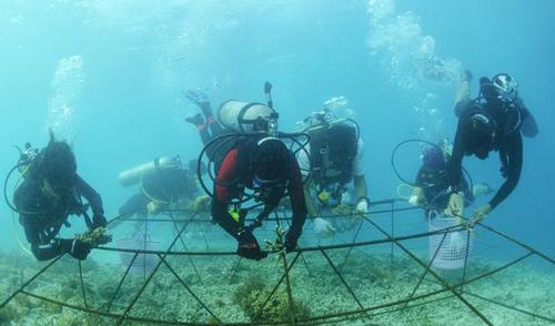 Indonesia dùng đá sinh học bảo vệ san hô