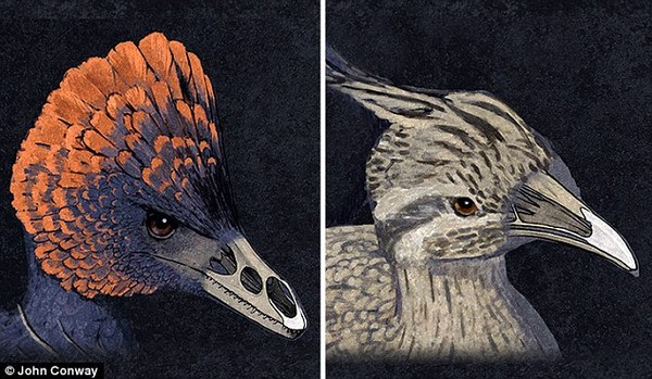 Tái tạo khuôn mặt khủng long từ mỏ gà