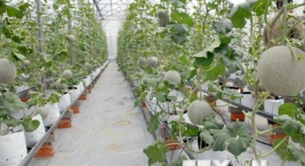 Việt Nam sẽ có 10 khu nông nghiệp ứng dụng công nghệ cao năm 2020