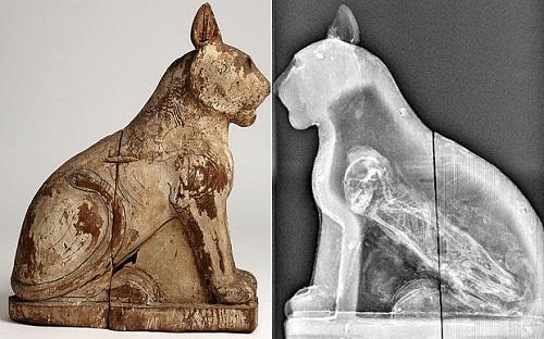 Nhiều xác ướp động vật thời Ai Cập cổ là đồ giả