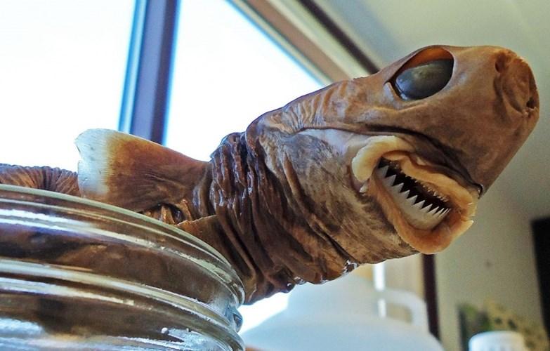 Kinh hoàng với những loài cá mập quái dị tới khó tin