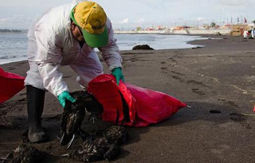1.300 con chim chết bí ẩn ở Chile