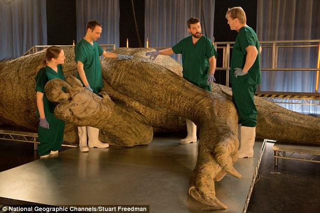 Lần đầu tiên khám nghiệm tử thi một con khủng long T-Rex hoàn thiện nhất