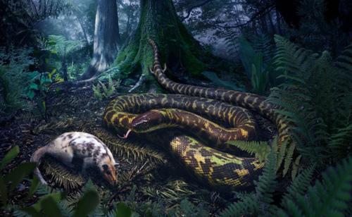Những con rắn đầu tiên trên thế giới có thể từng có chân