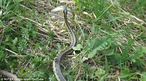Con rắn tinh quái