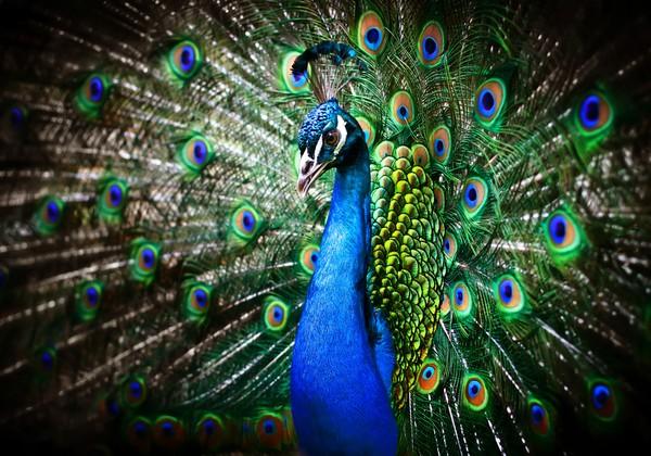 Động vật cũng quan tâm tới sắc đẹp như con người