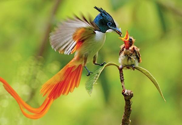 Động vật cũng quan tâm tới sắc đẹp giống con người