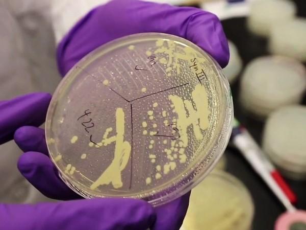Thử nghiệm thành công cấy ghép gene người trên nấm men