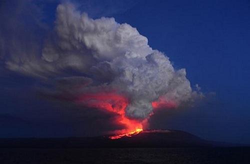 Núi lửa thức giấc, cự đà hồng gặp nguy hiểm