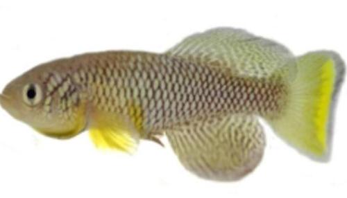Kinh ngạc loài cá biết bắt mồi trên cạn