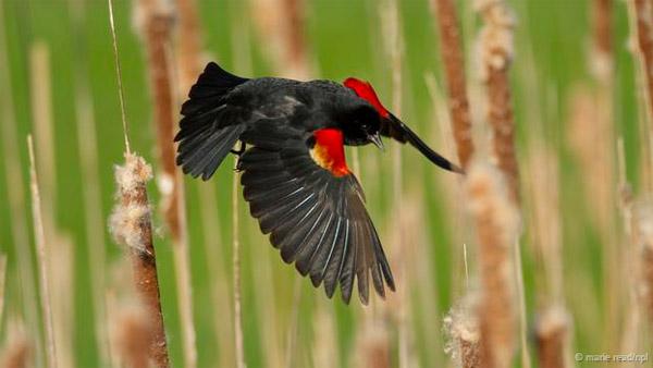 Khám phá những siêu năng lực của trứng các loài chim