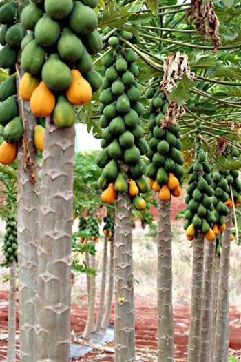 Dùng ozone để bảo quản trái cây
