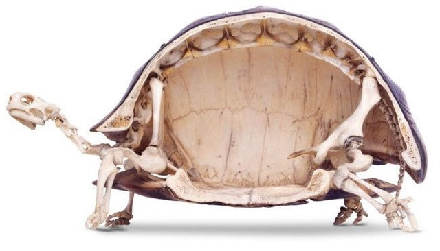 13 sự thật về loài rùa mà ít ai biết đến