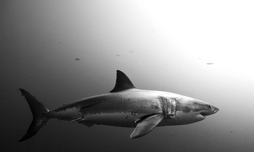 Chùm ảnh: Đời sống dưới biển ở Mexico