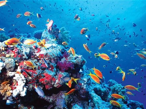Nhiệt độ Trái đất tăng lên khiến hệ sinh thái biển biến đổi mạnh mẽ