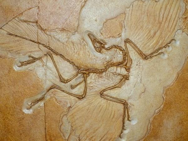 Trưng bày mẫu hóa thạch lâu đời nhất trong lịch sử tại Brazil
