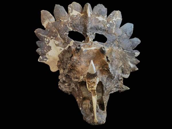 Phát hiện hóa thạch khủng long kì dị ở Canada