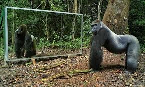 Phản ứng hài hước của động vật khi lần đầu soi gương