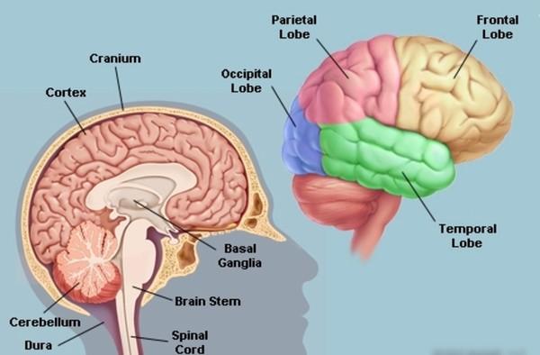 """Liệu bộ não có bị """"nổ tung"""" khi quá tải thông tin"""