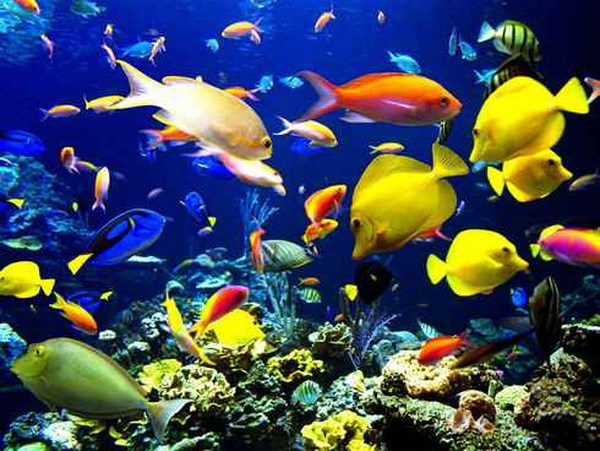Hàng nghìn sinh vật mới xuất hiện dưới đáy biển Caribe