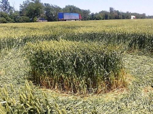 Vòng tròn bí ẩn trên cánh đồng ở Nga