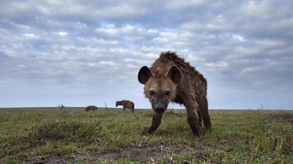 Những động vật bốc mùi nhất thế giới