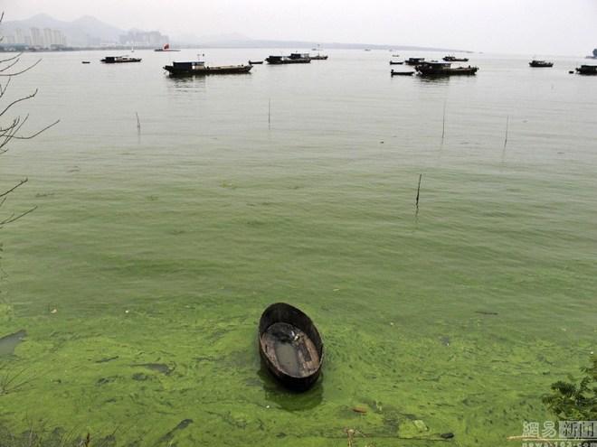 Tảo lam độc trải rộng 1,5 km hồ Trung Quốc