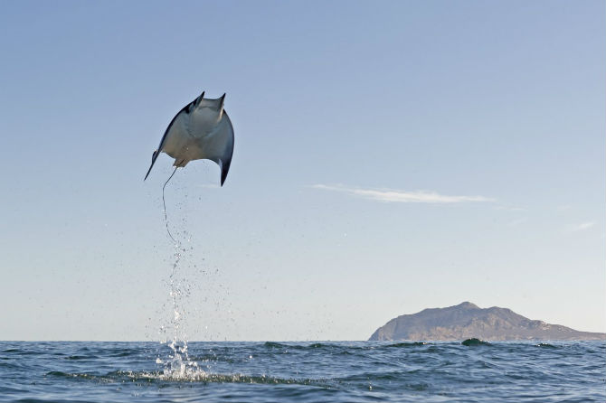 Những bức ảnh thú vị ghi lại cảnh cá đuối bay lên không trung