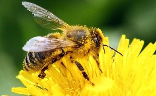 Ong và gián có thể phát hiện ma túy