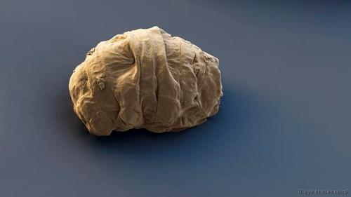 Khả năng bất diệt của sinh vật có từ 500 triệu năm trước