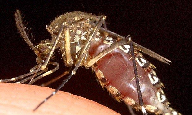 Trị bệnh sốt rét một liều duy nhất