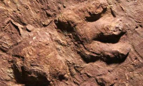 Phát hiện dấu chân huyền bí của loài bò sát thống trị thời tiền sử