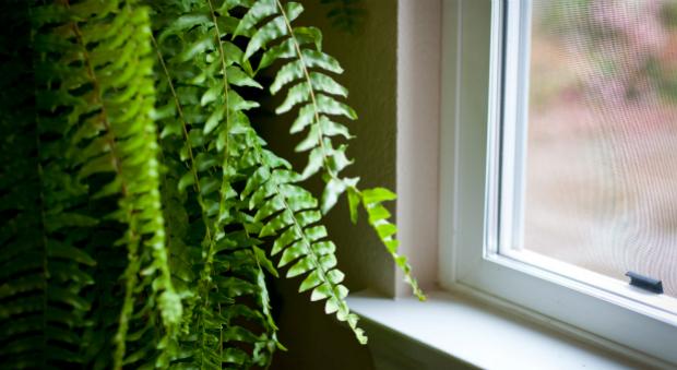 10 cách giúp nhà của bạn mát mẻ hơn trong những ngày nắng nóng