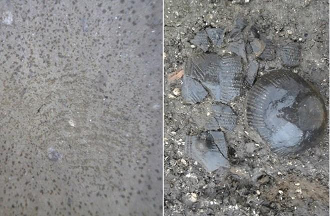 Phát hiện dấu vân tay lạ 5.500 tuổi trên bình gốm cổ