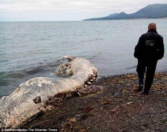 Xác loài sinh vật khổng lồ trôi dạt vào bờ biển Nga
