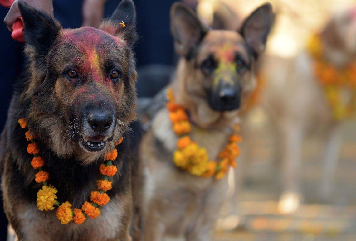 Lễ hội cảm ơn chó ở Nepal