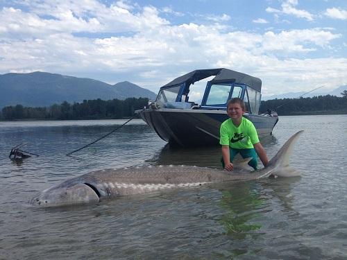 Cậu bé 9 tuổi câu được cá tầm trắng khổng lồ