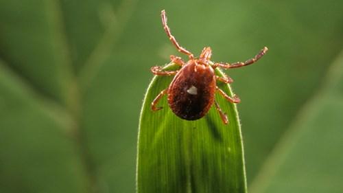 Loài côn trùng độc đáo biến người thành tín đồ ăn chay