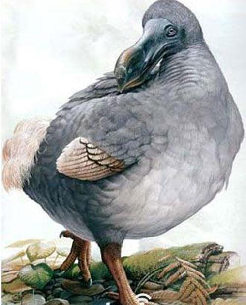 10 loài động vật tuyệt chủng thời cổ đại có hi vọng hồi sinh