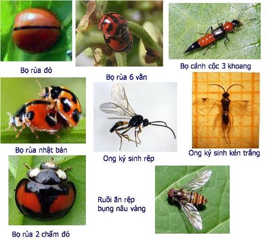 Tăng năng suất rau xanh và sạch nhờ côn trùng