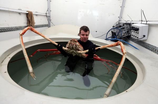 Lý giải nguyên nhân xuất hiệt các sinh vật khổng lồ đáng sợ dưới biển